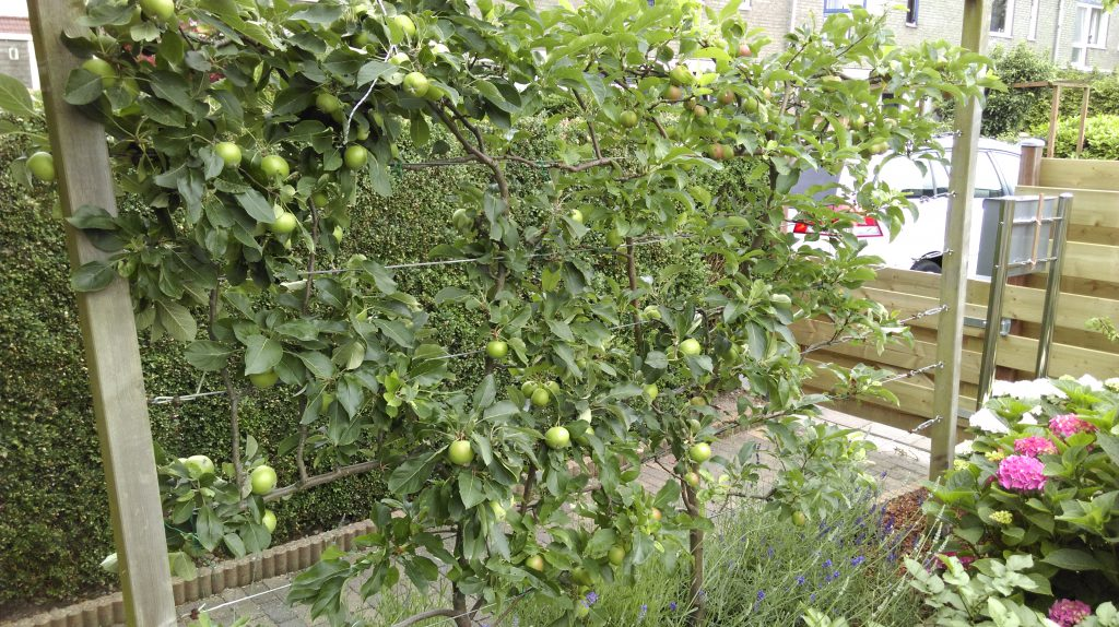 appelhaag